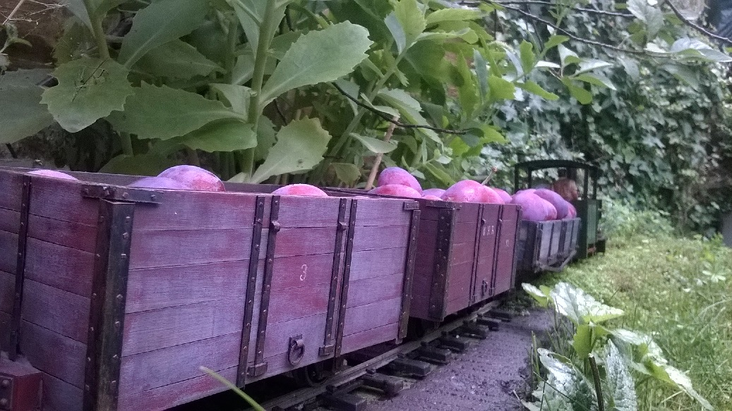 Plum trains 10.jpg